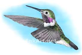 clipart ruby throated hummingbird pencil and in color