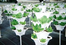 Container Vegetable Gardening Ideas Vegetables For Container Gardening Best Container Vegetables
