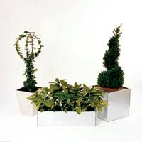 potted ornamental trees or shrubs
