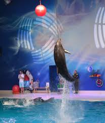 dubai zoo and seal and dolphin show crazy about colors