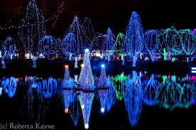 columbus zoo christmas lights december s season of celebrations sharing wildlights at the