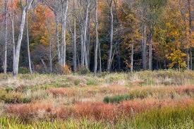 Manueldiazphotography photo keywords mcdowell grove forest preserve