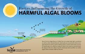 Bloom Harmful Algal Blooms In The Great Lakes Michigan Sea Grant