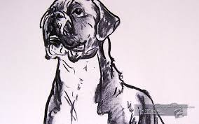 buy poster size art of a boxer dog drawing