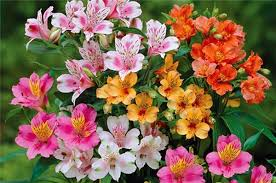 26 fresh and charming flowers in season in october gurmanizer