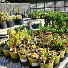 Marin Art And Garden Center Peter Lipson Author At Cactus Jungle