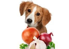 are onions for dogs can dogs eat onions risks side effects treatment