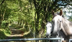 rural scene national equestrian properties and rural property