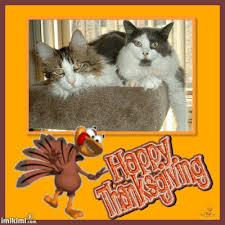 animated happy thanksgiving turkey photo frame imikimi