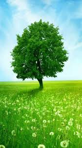 z wallpaper iphone 6 green tree 4 7 inches 13 750 x 1334