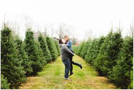 93 eby pines christmas trees bristol indiana 12 best