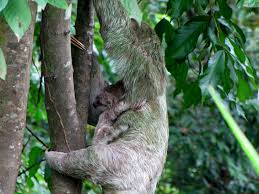 native plants of costa rica best places to see monkeys and sloths in costa rica