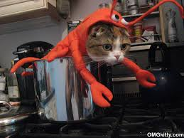 Lobster Costume Cute Kitty In A Lobster Costume My Disguises We Love Costumes