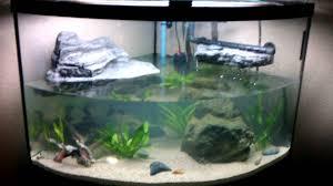 possible aquatic turtle tank habitat setup update rena xp3 youtube