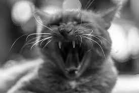 petsmart black friday sale petsmart black friday sale tv spot u0027doorbusters u0027 song by queen