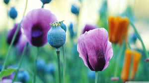 spring widescreen wallpapers group 82