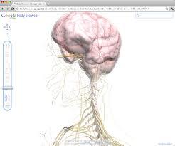 Google Body Anatomy Google Body Browser Information Portal For The Human Body
