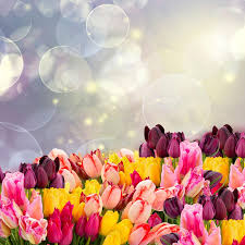 spring flower tulip spring flower wallpaper android apps on google play