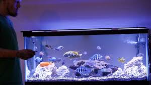 current usa orbit marine aquarium led light 2 15 15 current satellite plus pro vs current orbit marine led on