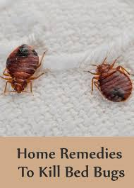Bean Leaves Bed Bugs 8 Home Remedies To Kill Bed Bugs Search Home Remedy