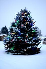 outdoor christmas trees with lights christmas lights decoration