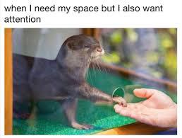 Otter Memes - funny otter shaking hands loldamn com