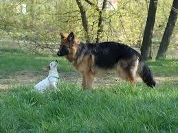 free images animal park german shepherd pets friends