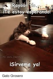 imagenes groseras de gatos rayos tio te estoy esperando fb gato cientifico isirverme ya gato