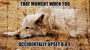 Wolf Meme Generator - sad wolf meme generator imgflip