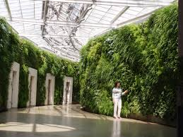 covered with vegetation u201cgreen wall u201d u2013 info biologypop