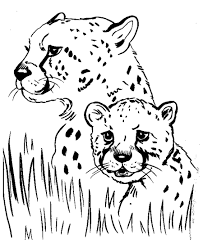 impressive cheetah animal coloring pages baby leopard coloring