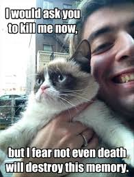 Create A Grumpy Cat Meme - 30 very funny grumpy cat meme pictures and photos