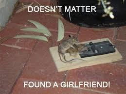 Mouse Memes - dead mouse trap new nation