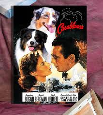movies with australian shepherds 11 best i australian shepherd images on pinterest