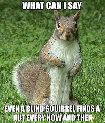 Squirrel Nuts Meme - what can i say even a blind squirrel finds a nut every now and then