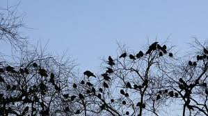 birds flying away from the tree stock footage 14957617