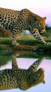 imagenes de animales whatsapp fondos de animales para whatsapp imágenes wallpappers