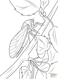 cicada coloring pages preschool and kindergarten