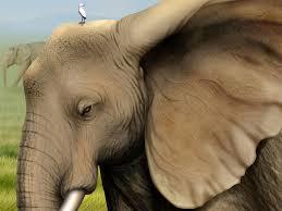 desktop hd elephants cartoon images
