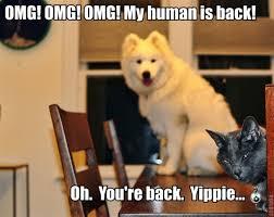 Sarcastic Cat Meme - i think the cat may be sarcastic meme guy