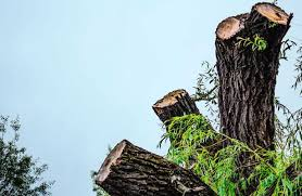 tree removal costs find estimates and pros who can help kudzu com