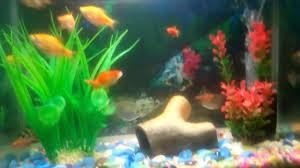 types of aquarium all types of fish in a 10 gallon aquarium youtube