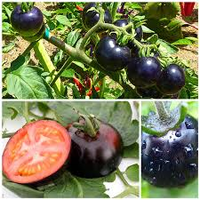 200 bag black tomato seeds vegetable and fruit seeds resistant to