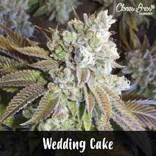 wedding cake kush wedding cake clones for sale clones bros nursery