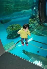 home design degree baby nursery fascinating zoo and aquarium design degree viewing