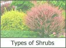 Bushes For Landscaping Of Shrubs For Landscaping 2016 Design Plans