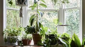 biggest house plants an indoor plant bonanza in newcastle newcastle herald