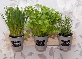 Kitchen Herb Pots Multi Use Organsation Pots Yorkshire Oak
