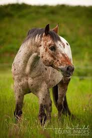 Black Mustang Horse Pictures Best 25 Pretty Horses Ideas On Pinterest Horses Horse And
