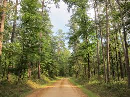 Texas forest images East texas life with a view jpg